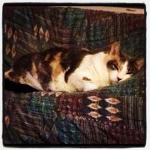 Rosie The Cat (2001-2013)